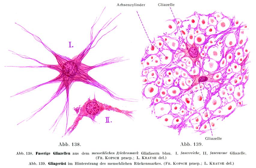 膠 細胞 神経
