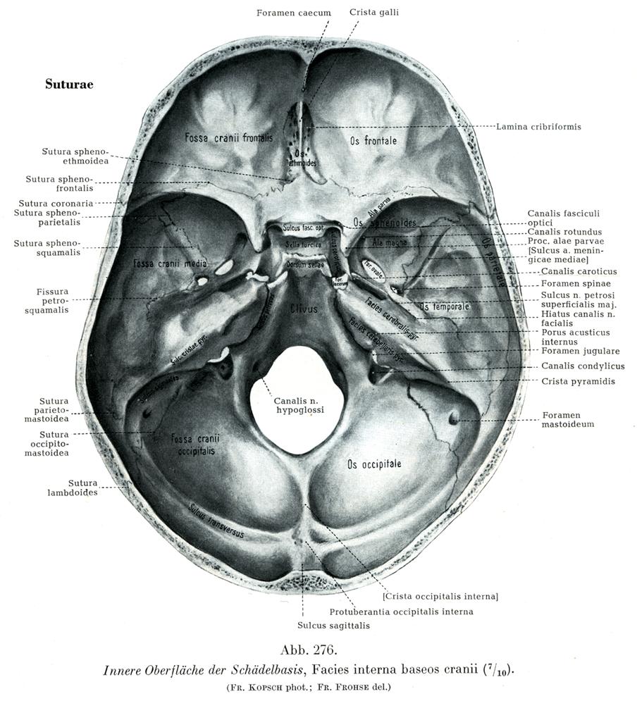 孔 頸 静脈 頸静脈孔まとめ!場所、通るもの、腫瘍の種類、頸静脈孔症候群とは?
